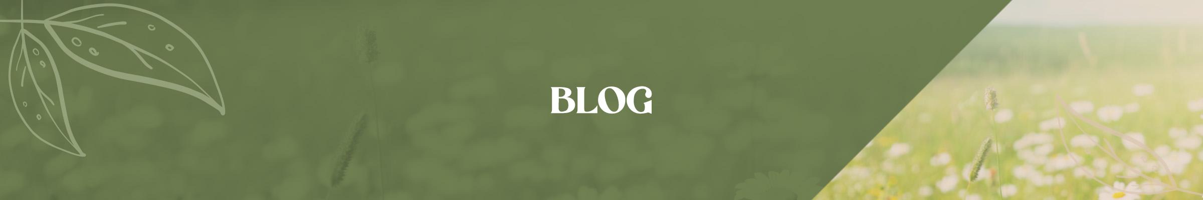 Campagne - Bannière Blog