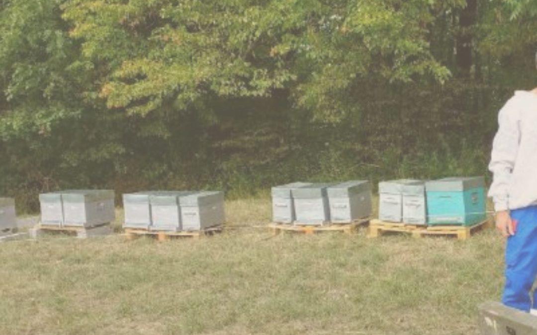 Mathias, un apiculteur reconverti, raisonné et en pleine mutation.